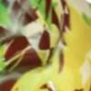 bruin-groen-tito